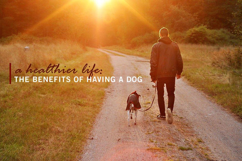 Benefits of Dog